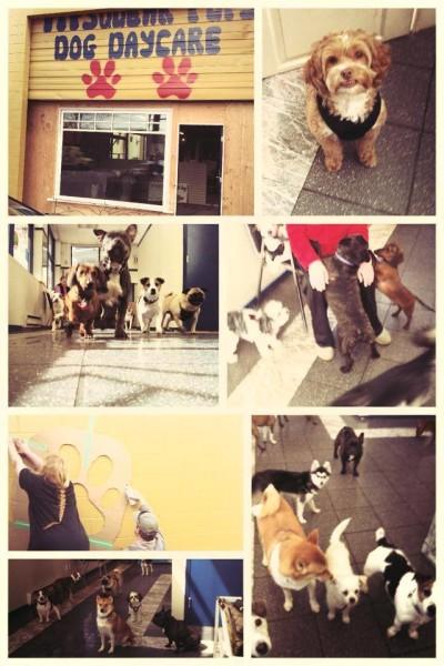 The gang at Pipsqueak Pups.