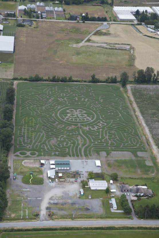 pitt meadows maze 1