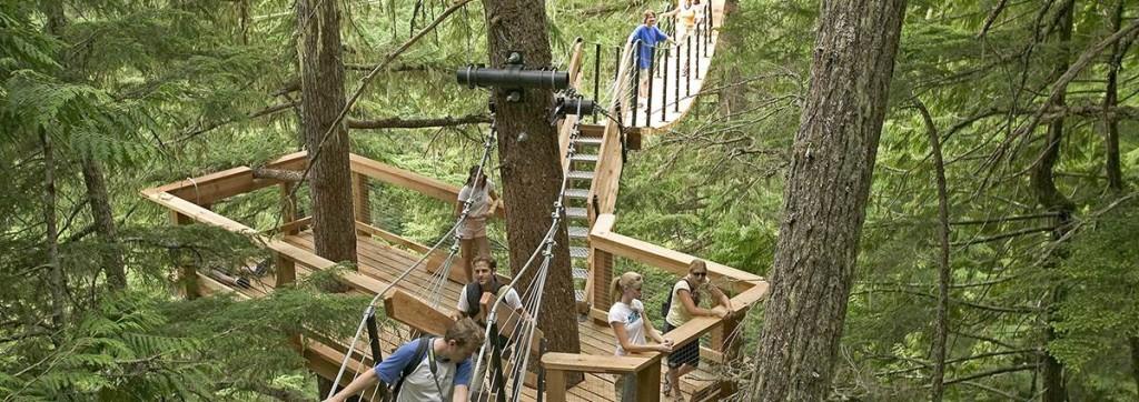 tree trek whistler