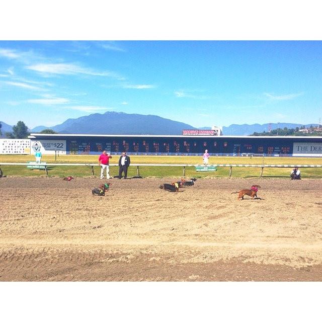 wiener-dog-races-2014