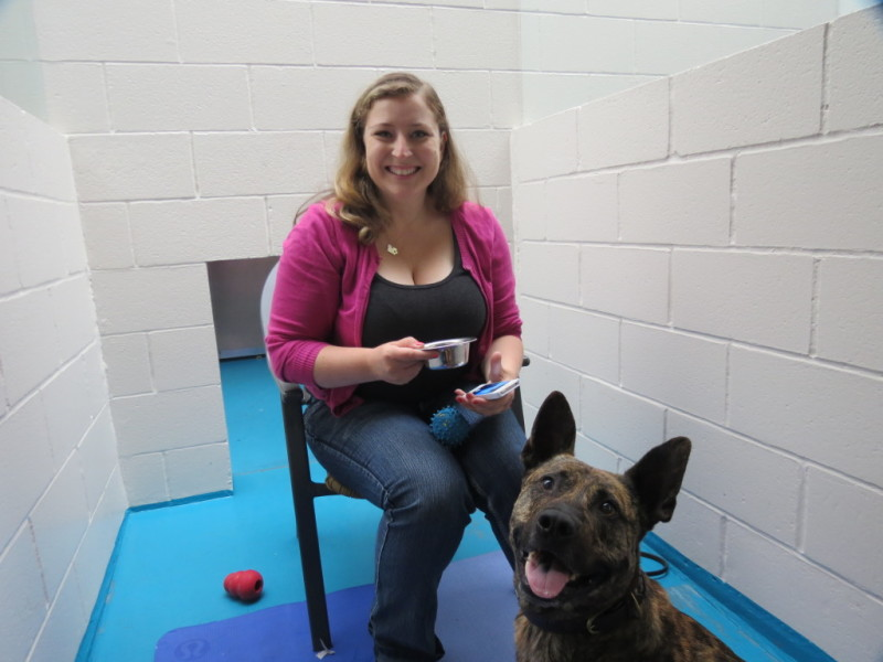 Miss 604 locked in the SPCA kennel (courtesy Meghan Boswell)