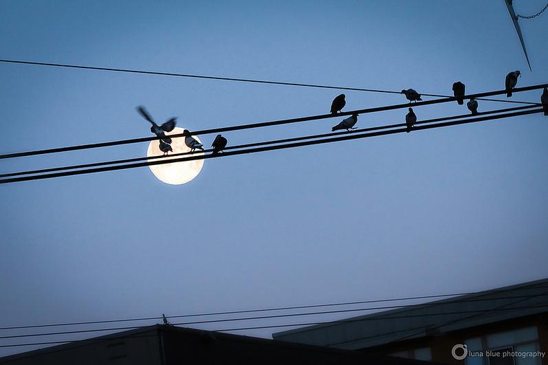 Luna Blue Photography