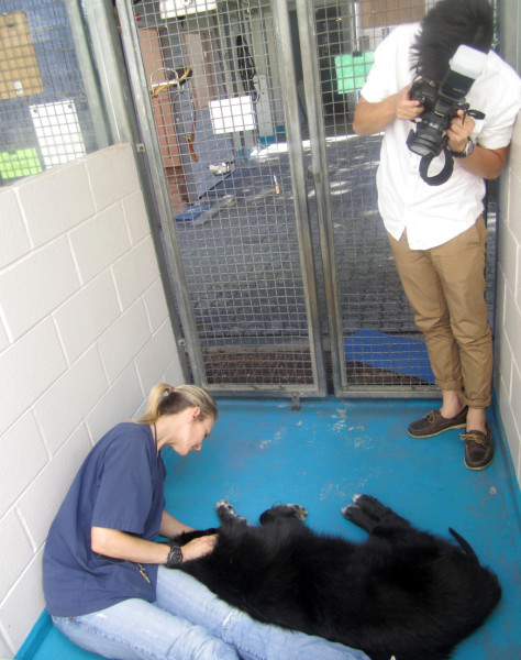 Photographing the animals at the SPCA (Courtesy Made in Print)