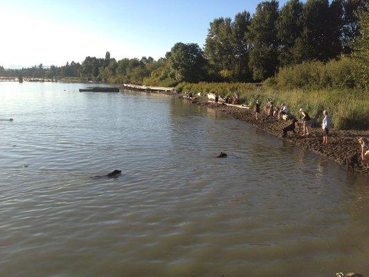 Fraser River Park (Yelp)