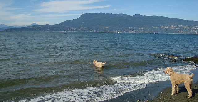 Spanish Banks Dog Beach.