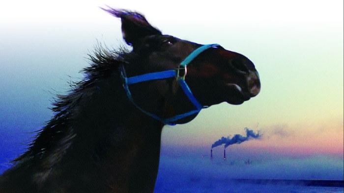 HorsesOfFukushimaThe