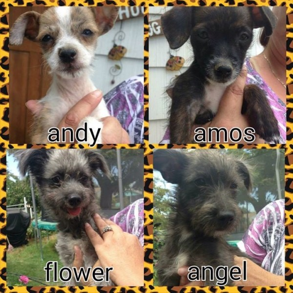 Four of the adoptable pups.