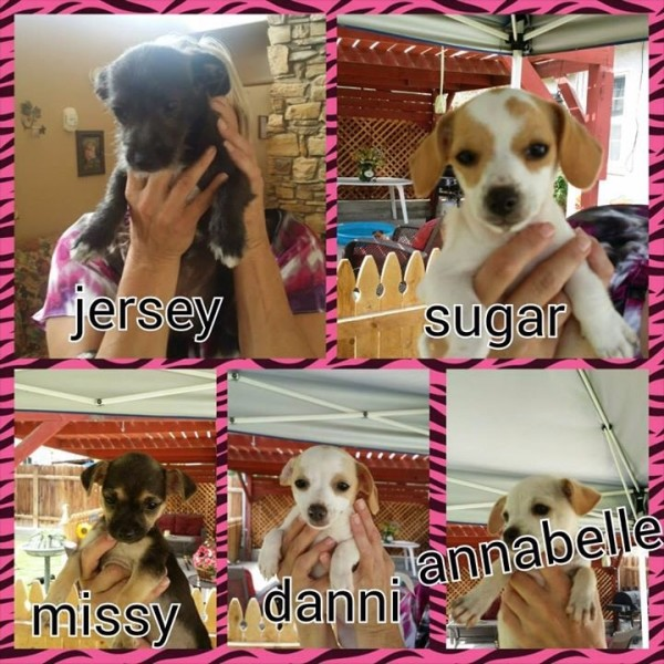 Five of the adoptable pups.