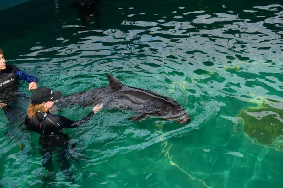 vancouver aquarium false killer whale 2