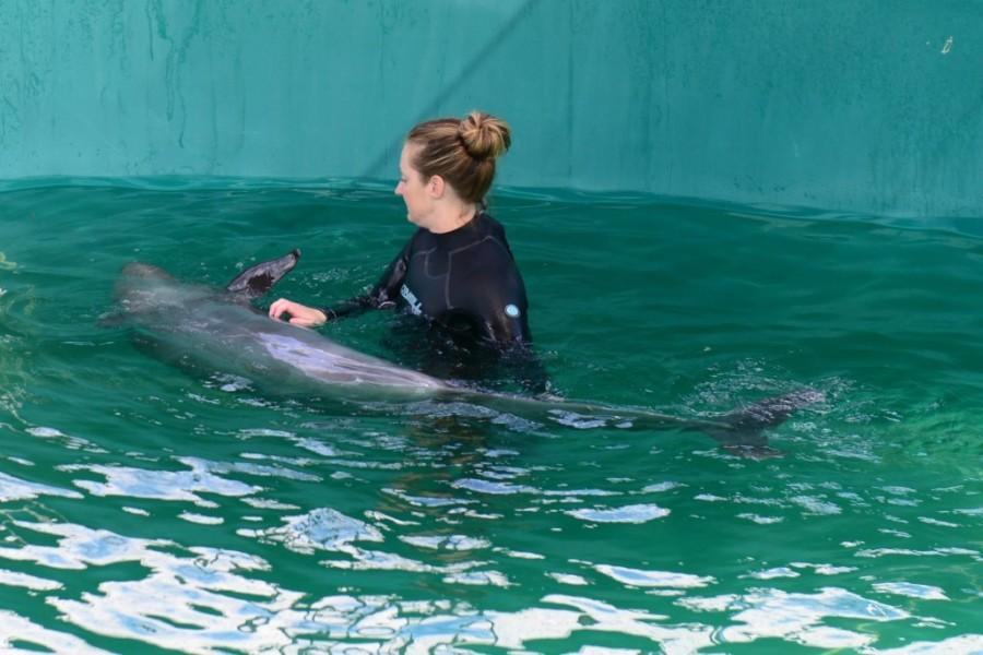 vancouver aquarium false killer whale 5