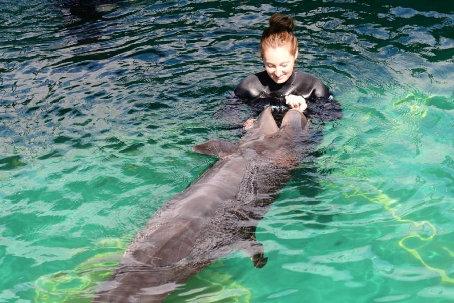 vancouver aquarium false killer whale 7