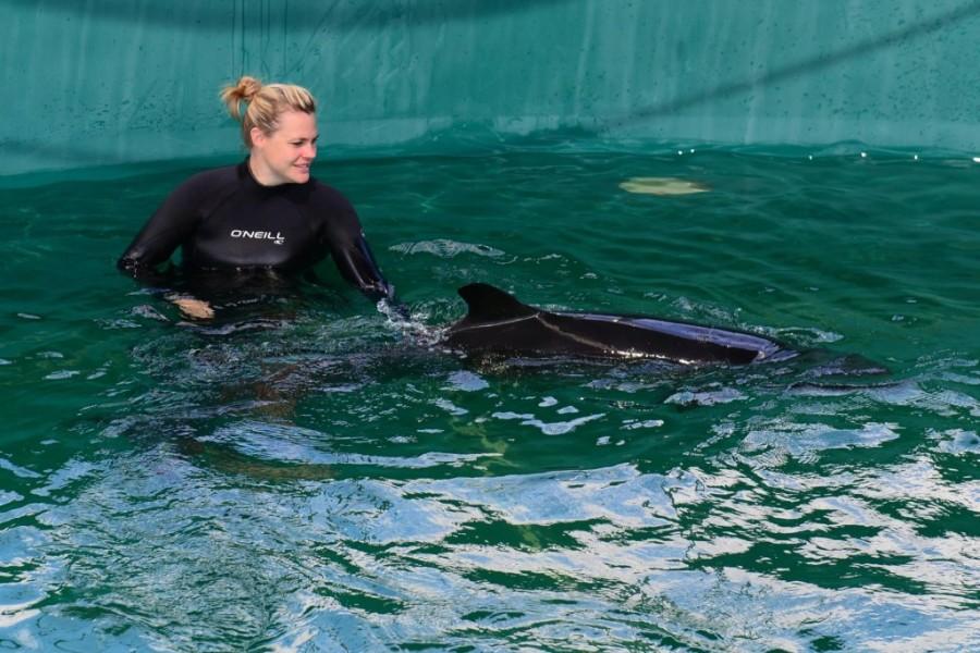 vancouver aquarium false killer whale 8