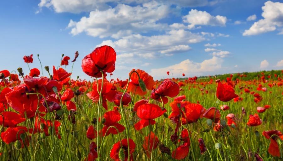 Poppy / Shutterstock