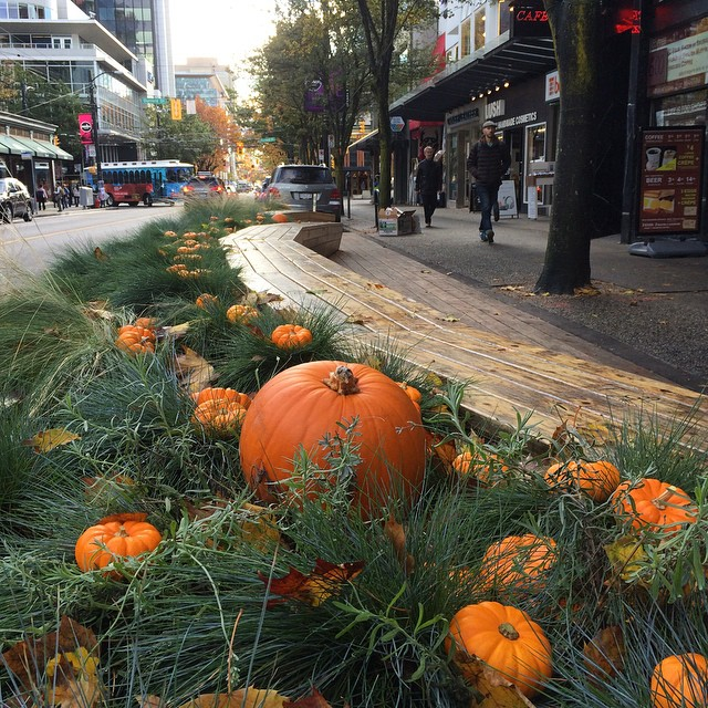 Robson Pumpkin Patch 2