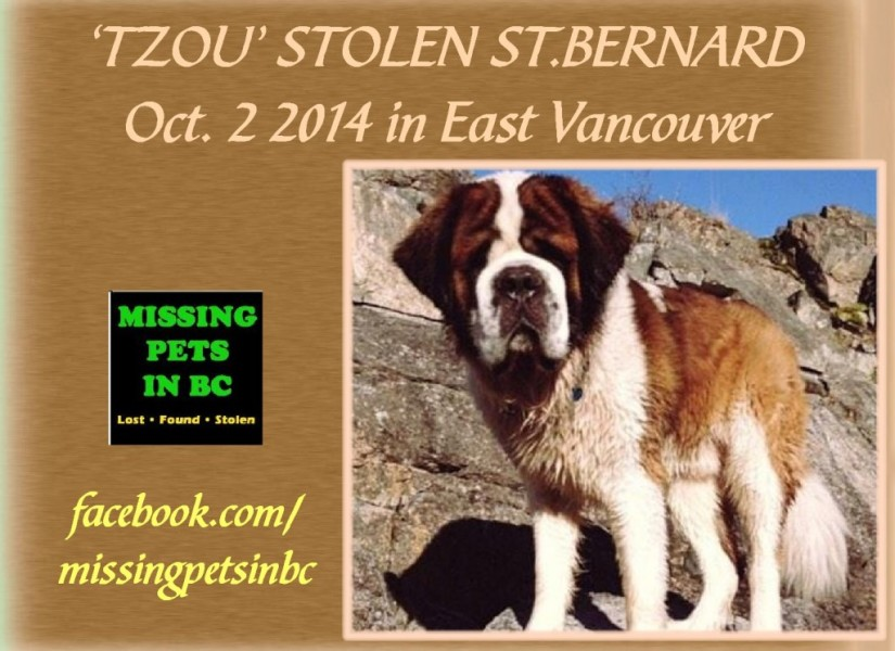 TZOU-STOLEN-SAINT-BERNARD-in-EAST-VANCOUVER-33-Acres-Brewing-Company-15-W-8TH-Ave-OCT-2-2014-1024x744