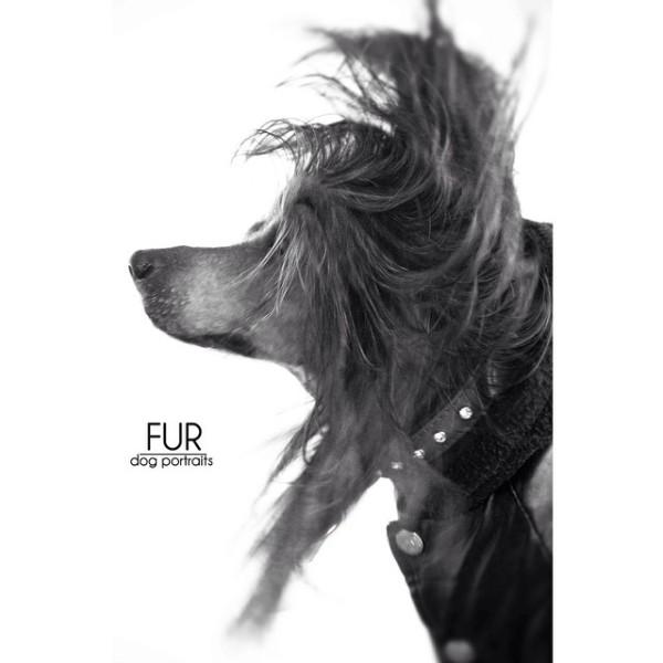 Instagram:  Fur_portraits