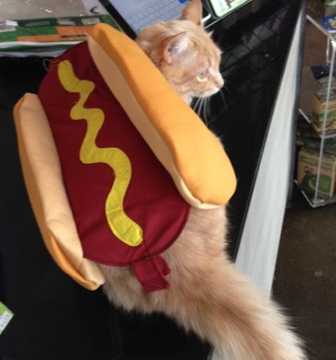 hot dog cat - bone and bowl