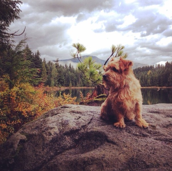Guided hike around Lost Lake with Alpine Dogs (Instagram: PappaBoney)
