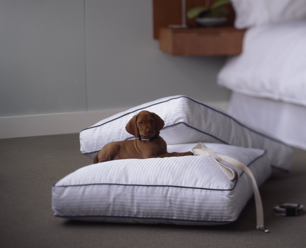 wesde-27126-Heavenly dog bed