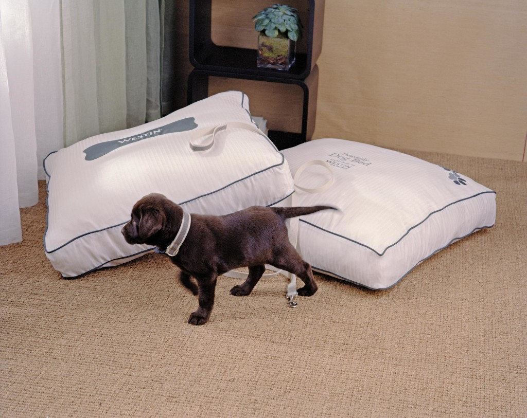 wesde-41980-Heavenly dog bed-2