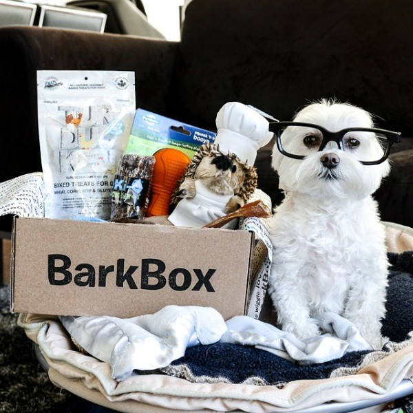 Toby Little Dude poses with his Barkbox haul. (http://instagram.com/toby_littledude)