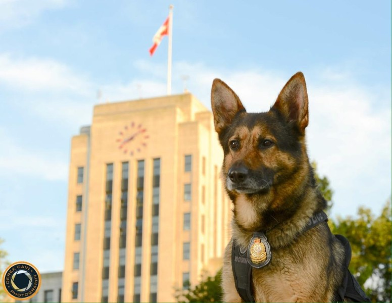 Canine officer Blade guards the city by day (VPD Canine Unit)