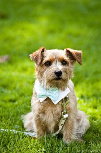 Murphy Brown the terrier/lil groomsman.