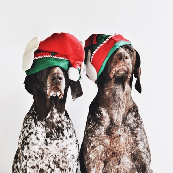 An image from the Pointer Brothers calendar.