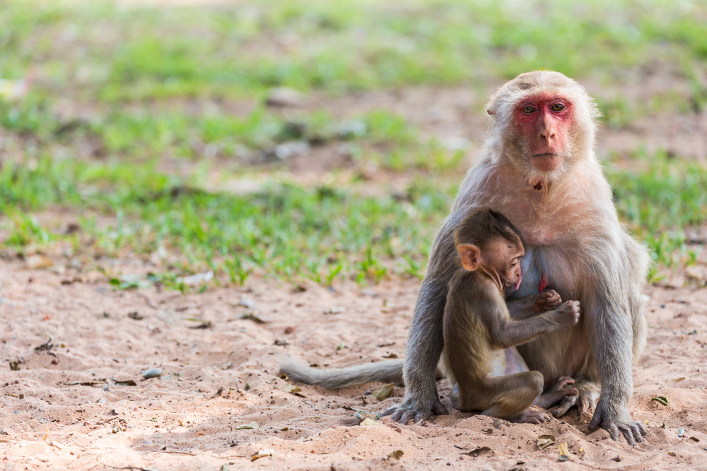 monkey monkeys / shutterstock