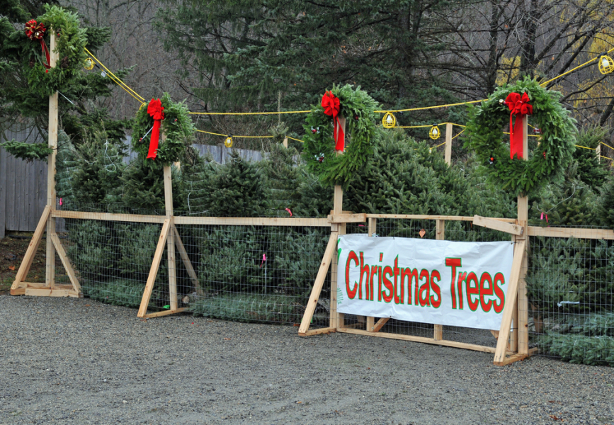 Image: Christmas tree sales / Shutterstock