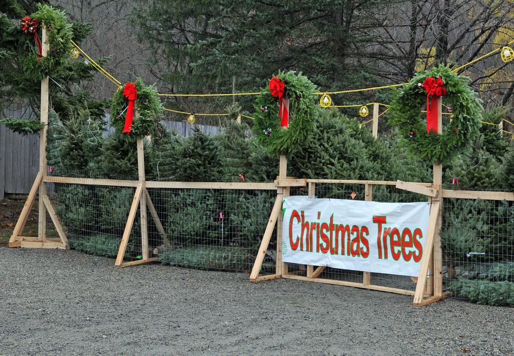 Image: Christmas tree sales / Shutterstock