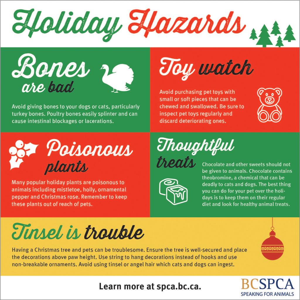 BCSPCA food infographic v3