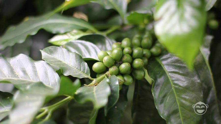 leaves-green-beans