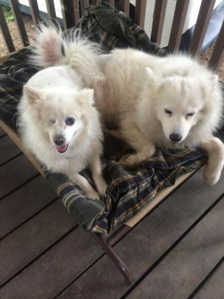 Winky, on left/Carried Through Animal Rescue and Education