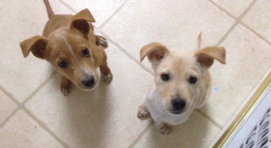 Henry and Wilma are nine-weeks-old and ready for their forever homes (Big and Small Rescue).