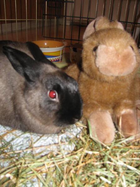 Nelson Bundela/Small Animal Rescue Society