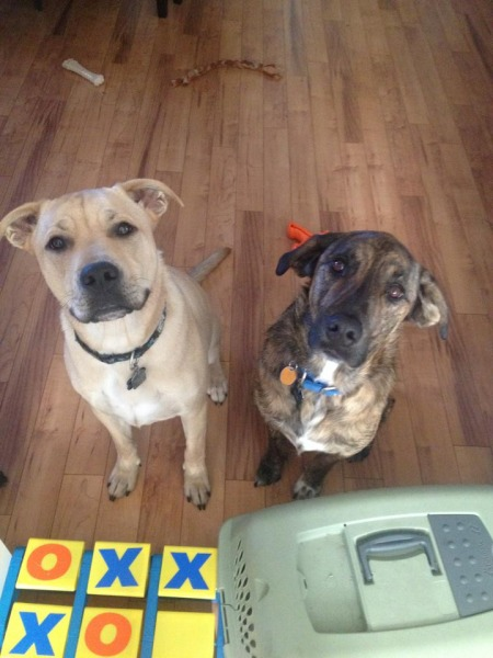 Oakley and Rawlings are sweet bonded boys looking for a new home. (Big and Small Rescue)