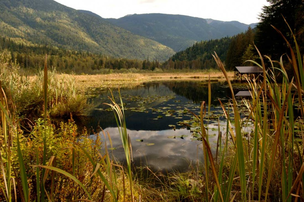 33-the-enchanted-forest-bc-attraction-revelstoke