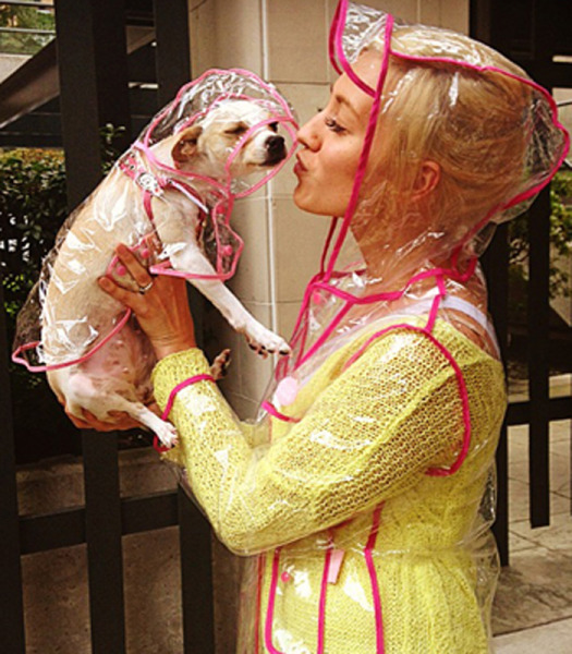 Clear dog raincoat from Barking Babies.