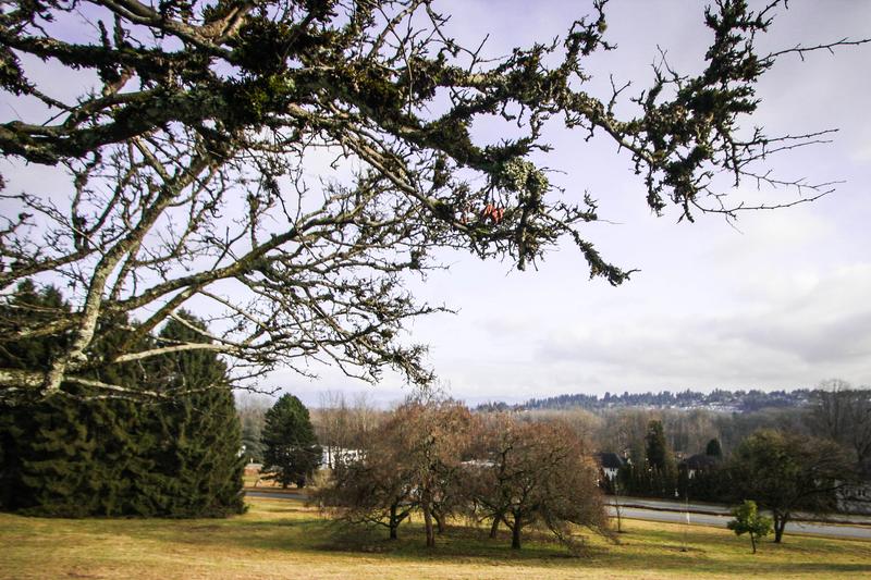 riverview-244-acres