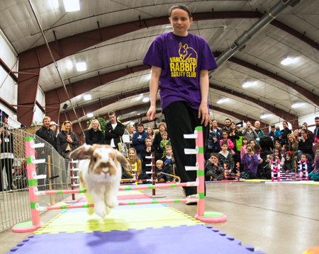 The Vancouver Rabbit Agility Club will put domestic rabbits through the paces.