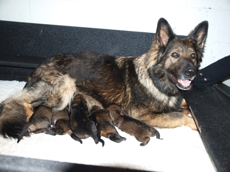 These 10 new canine recruits need names (RCMP).