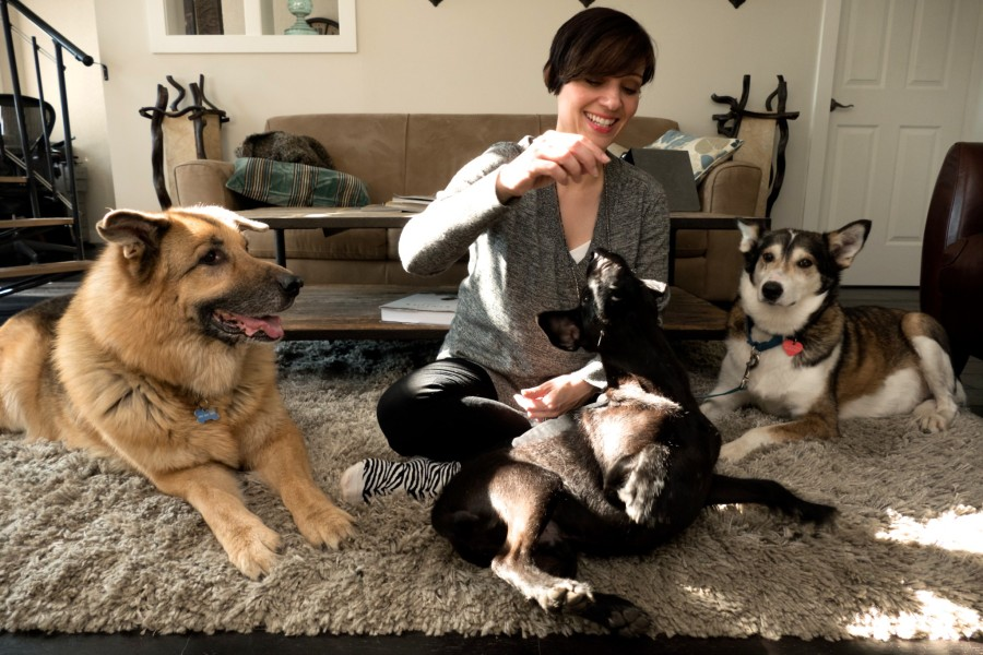 Nat and her three rescue dogs, Jake, a shepherd, Angus, Patterdale Terrier, and Maeby, husky cross. (Nat Hunter)
