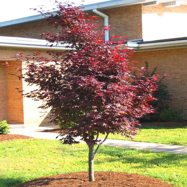 Image: Tree Keeper