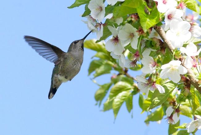 Vancity Buzz - Hummingbird
