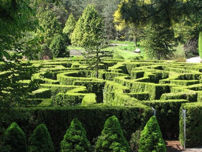 Vancity Buzz - Maze Image