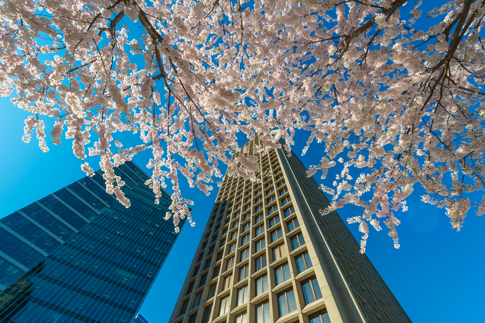 waterfront station cherry blossoms granville square / shutterstock