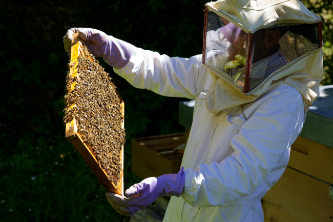 Beekeeping program teaches how to handle bees (Image: mbeo | Flickr)