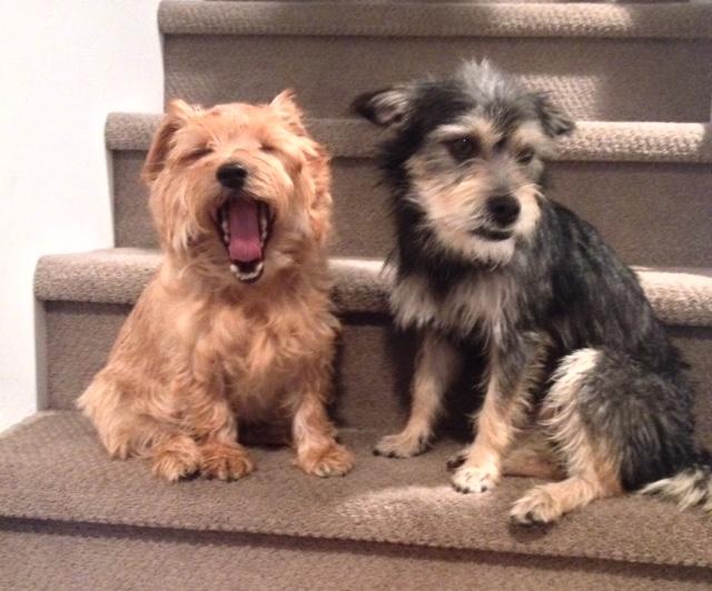 Murphy and Seymour.