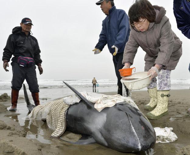AP Photo/Kyodo News